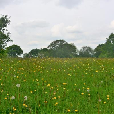 Melverley Meadows